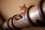 Как построить транзитную систему для кошки в стиле Стимпанк
