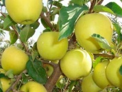 Правильные саженцы — залог хорошего урожая